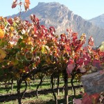Autumn Vine with Mountain
