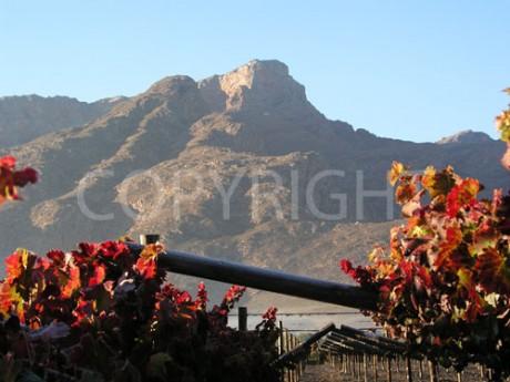 Autumn Vines with Mountain Peak