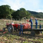Butternut harvesters 2