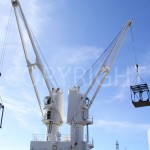 cranes busy with loading process