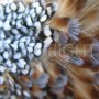 Feather close up 2