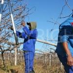 men pruning