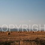 hay-bales,-groblersdal