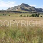 hay-bales-near-Clarens